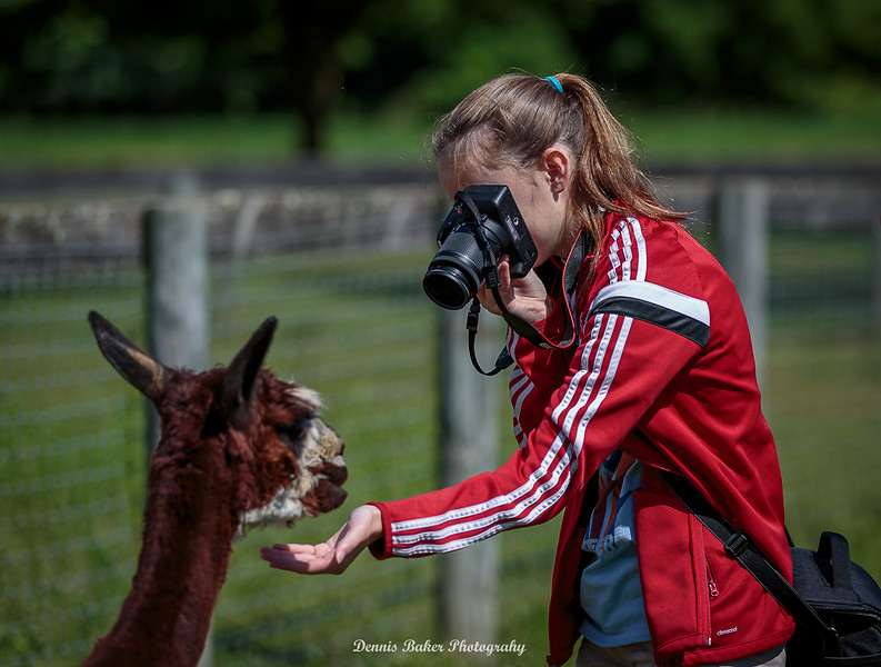 Alpaca Farm_035