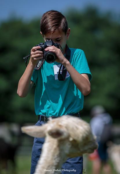 Alpaca Farm_061