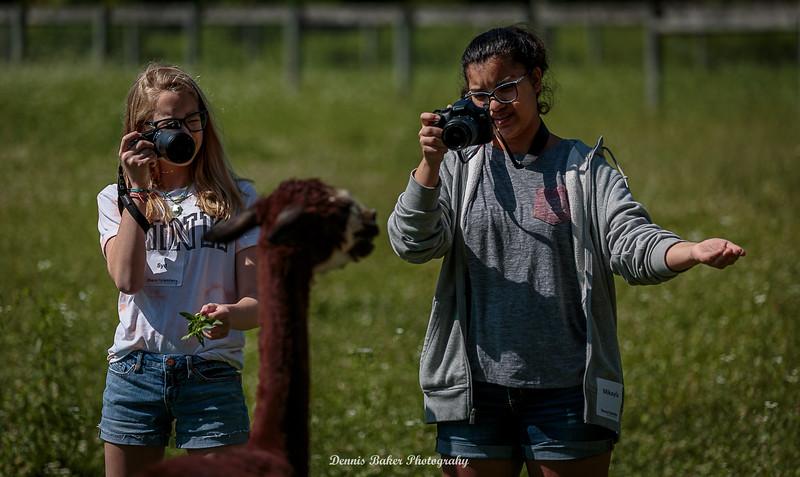 Alpaca Farm_014