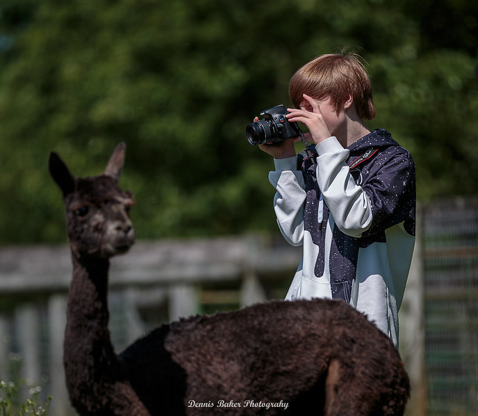 Alpaca Farm_012