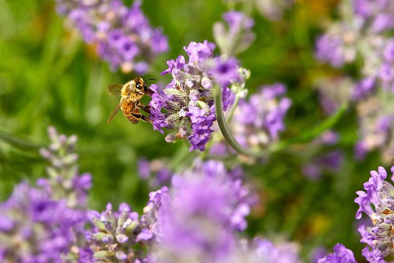 Working bee.