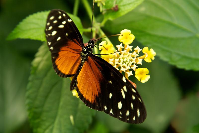 Butterfly Garden 3