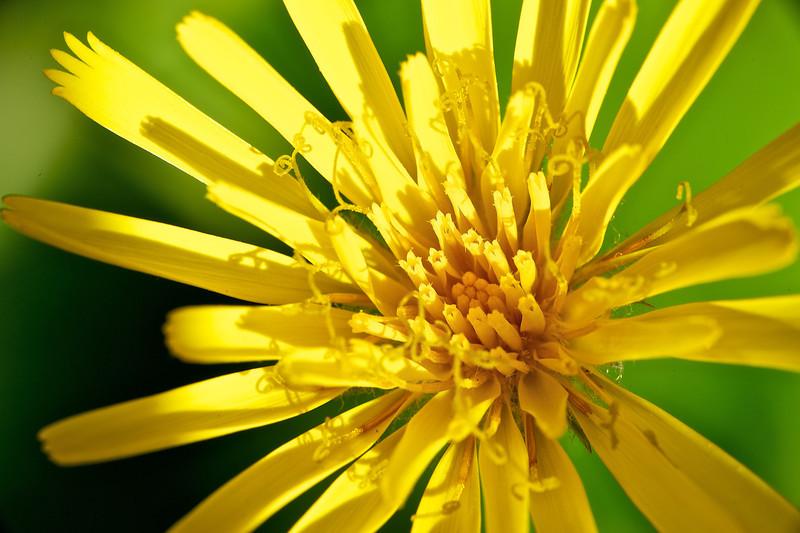 Wildflower glory.