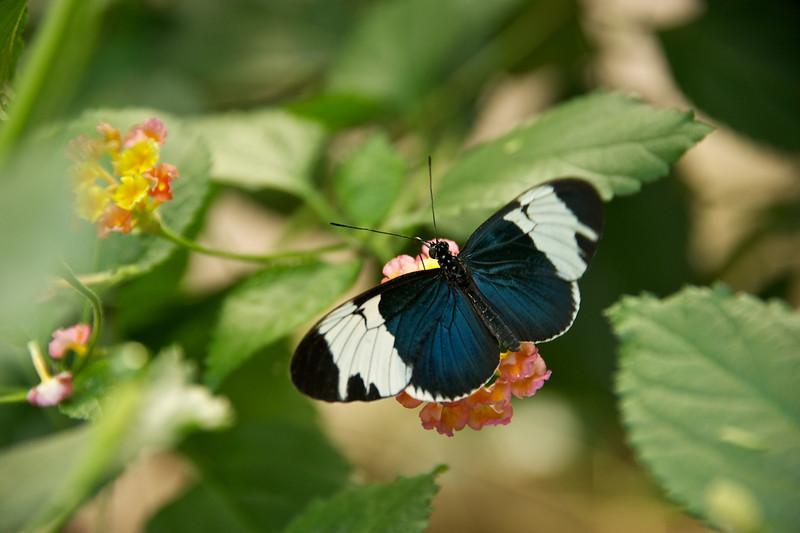Butterfly Garden 2