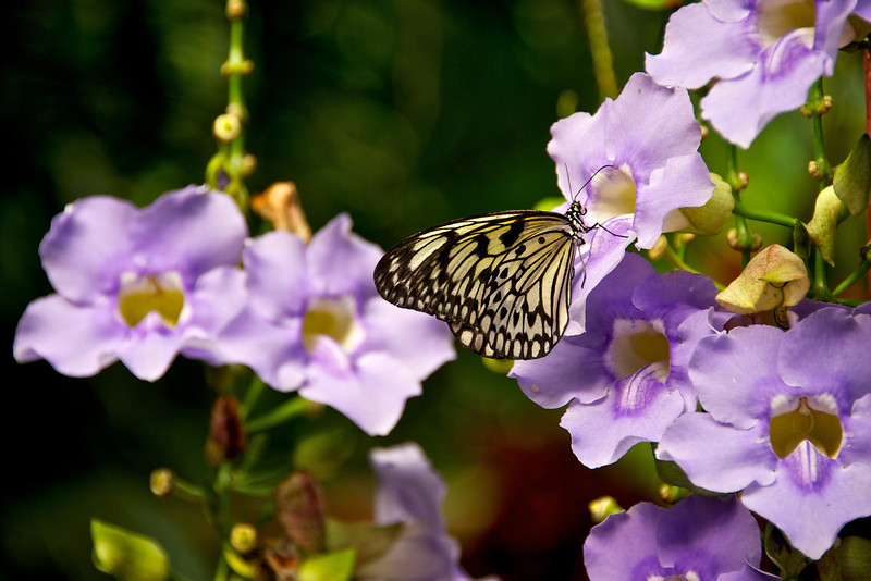 Butterfly Garden 4