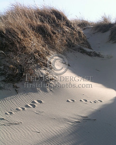 Sand And Prints - Dunes At Cold Storage Beach - Christmas Day 2005 - Dennis,Mass. - Cape Cod