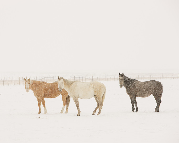 Textured Horses (SOLD OUT)