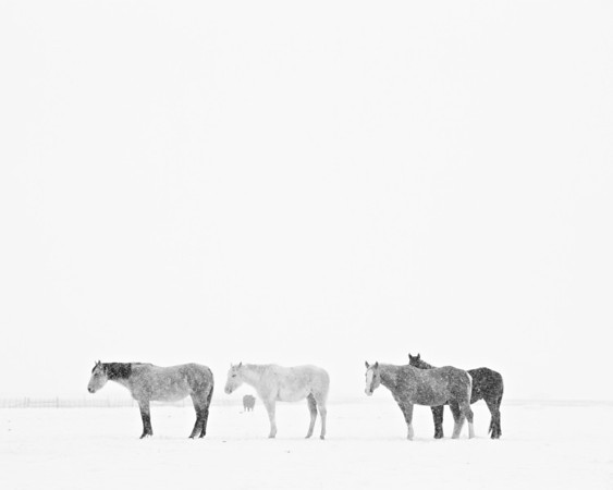 Pioneer Horses (SOLD OUT)