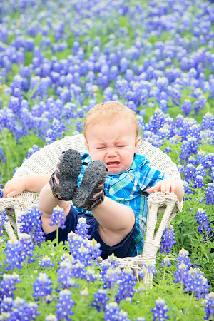 collin bluebonnet