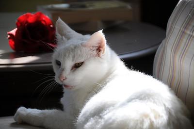 Collin's Cat