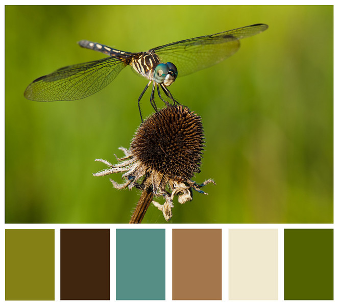 Dragonfly Colorboard