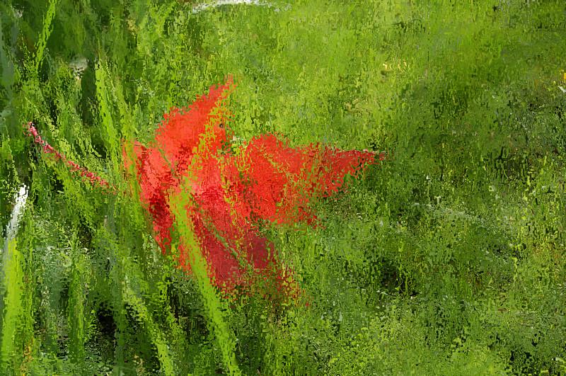 Red Leaf Under Glass, Under Grass