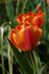 Orange, I have a crush on you!