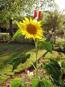 Bird seeds did this...wonderful!