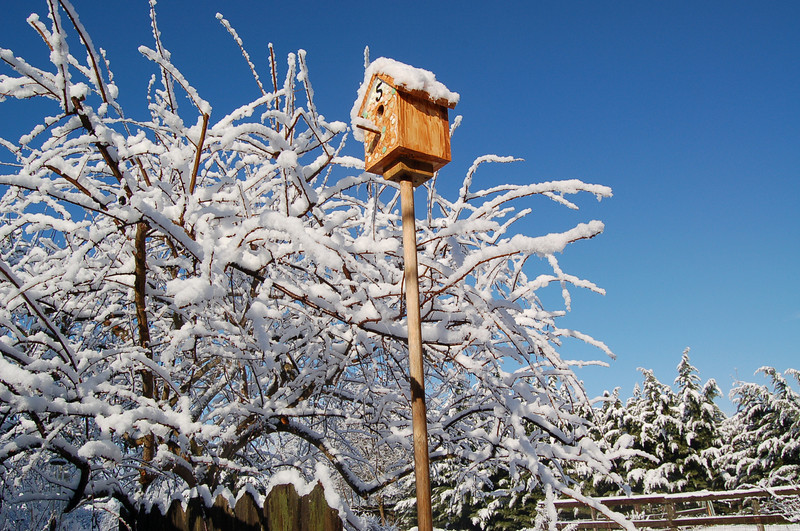 Bird Cabin in the Snow