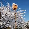 Bird Cabin in the Snow