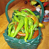 Dave and Judy's wonderful chile peppers, mostly Anaheims and Poblanos, and a few Jalapenos.