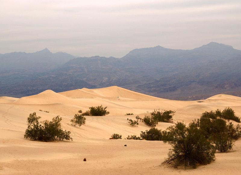 Dunes & Mist