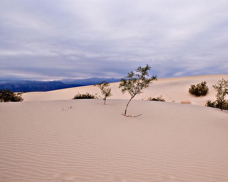 Dunes With Overcast