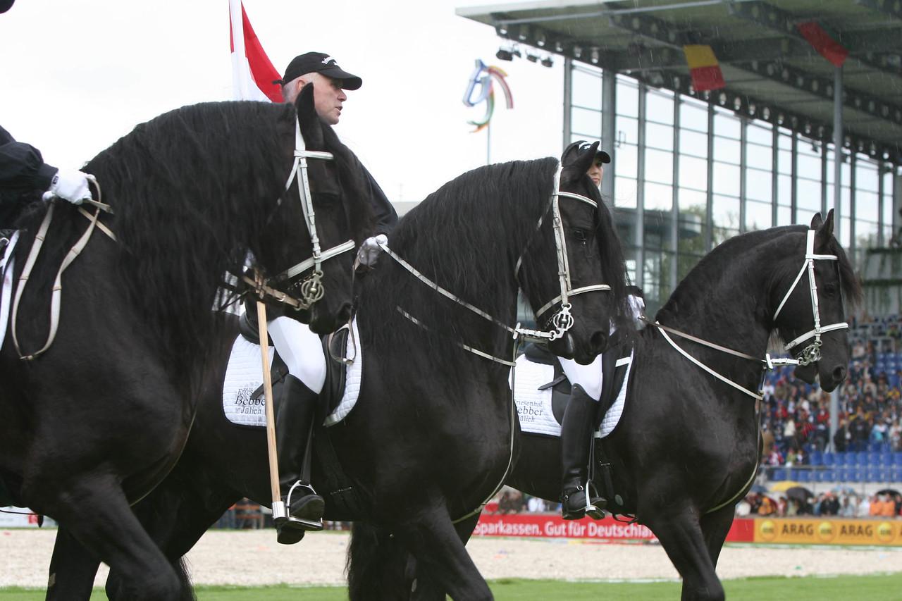 #23 Freisian Stallions