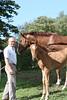 #43 - local barn raises these lovely horses