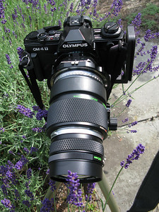 OM 4T with Mirex T-S adapter, custom (Srb Griturn) Mamiya to OM adapter,autotube with Z. 135 macro lens.
