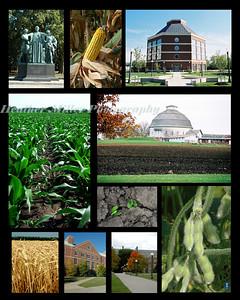 UIUC Crop Sciences Comp2