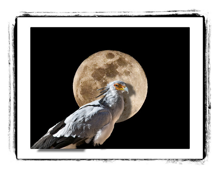Falcon composite with full moon.