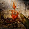 A flower / texture composition.
