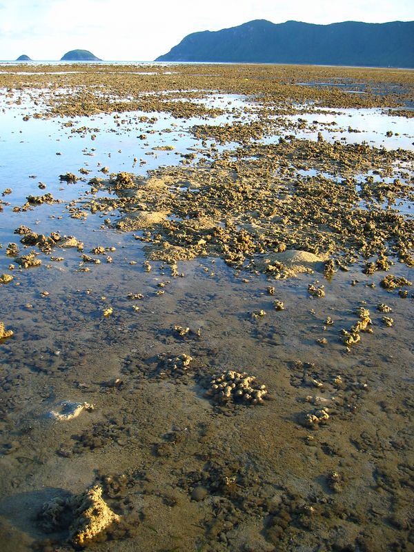 coral at low tide