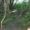the trail behind the campsite leads to.....
