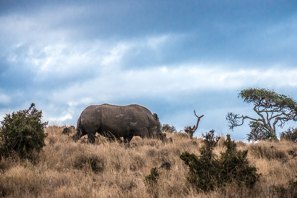 Conservancy_Kenya_is_beautiful