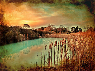 Blooming Cattails at Sunset (I jumped out of the car to take another picture...turned around....and there this was.)  Photographer's Name: Reid Smith Photographer's City and State: Charlotte, NC  To vote in favor for this photo, simply add a comment below. You can also share this photo on Facebook and Twitter using the buttons above.