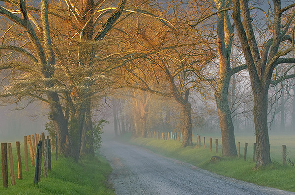 GRAND PRIZE WINNER Sparks Lane First Light Smoky Mountains - Cades Cove submitted by: David Sauro from USA