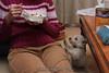 Westie_Puppy-12-11-09-078