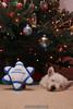 Westie_Puppy-12-11-09-034