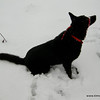 Cara in deep snow