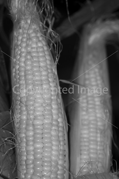 Corn B&W_-3