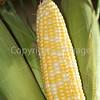 Corn Color_-14