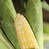 Corn Color_-12