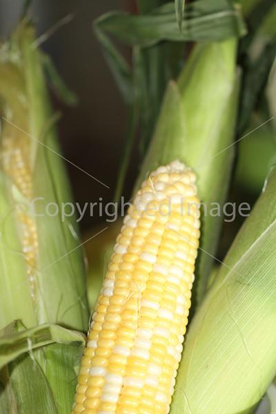 Corn Color_-10