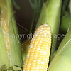 Corn Color_-10