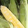 Corn Color_-13