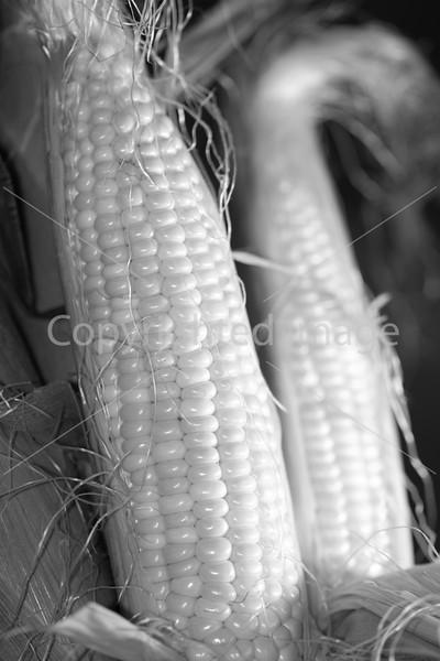 Corn B&W_-4