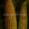 Corn Color_-1