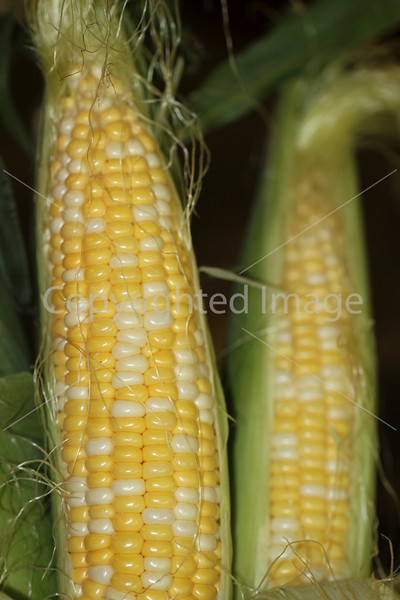 Corn Color_-3