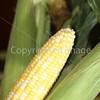 Corn Color_-18