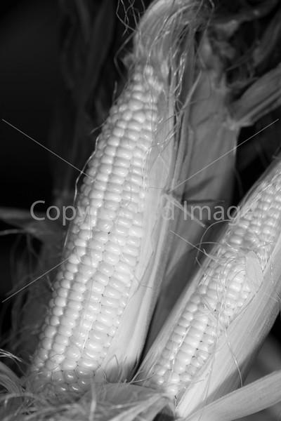 Corn B&W_-9