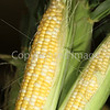 Corn Color_-9