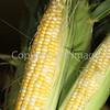 Corn Color_-9